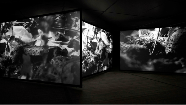 Gail Pickering | Baltic Exhibition | Near Real Time Installation